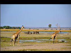 Safari en nuestro camión en el PN Chobe. Botswana.: Botswana, Zimbabwe, Cataratas Victoria