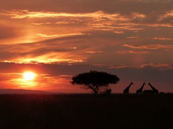 Atardecer en P.N. Murchison Falls: Uganda, Rwanda