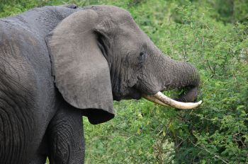 P.N. Queen Elizabeth: Uganda, Rwanda