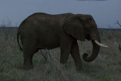 SSD safari por Hlane NP en Swaziland : Sudáfrica