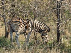 SSD safari por Kruger: Sudáfrica