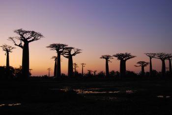 Avenida de los baobabs: Madagascar