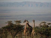 foto VIAJES Tanzania, Zanzíbar 2