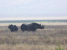 Rhino Cráter del Ngorongoro, Tanzania: Tanzania