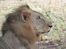 León Selous, Tanzania: Tanzania