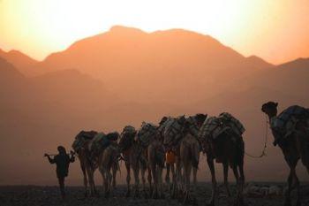 Caravana de camellos, Lago Assale: Etiopía