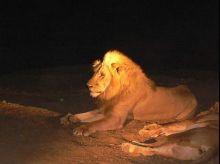 Safari nocturno en PN South Luangwa: Malawi, Zambia