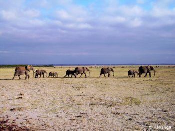Fauna en el Parque Nacional de Amboseli. Kenya.: Kenya, Tanzania