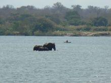 Elefantes en Río Zambeze, Zambia: Zambia, Zimbabwe