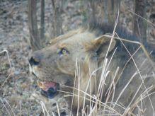 León South Luangwa, Zambia: Zambia, Zimbabwe