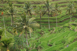 imagen Indonesia