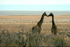 imagen Tanzania, Kenya