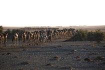 foto VIAJES Etiopía 5