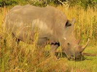 foto VIAJES Uganda, Rwanda 1