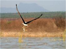 foto VIAJES Kenya, Tanzania 4