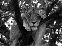 foto VIAJES Kenya, Tanzania 2