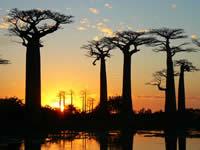 foto VIAJES Madagascar 3