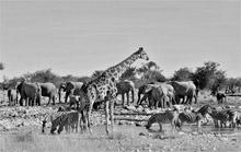 foto VIAJES Namibia 1