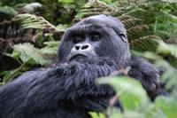 foto VIAJES Uganda, Rwanda 4