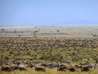foto VIAJES Tanzania, Kenya, Zanzíbar 3