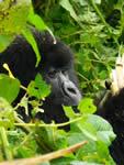 foto VIAJES Uganda 4