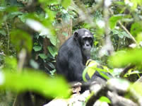foto VIAJES Uganda, Kenya, Tanzania, Zanzíbar 1