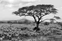 foto VIAJES Uganda, Kenya, Tanzania, Zanzíbar 4