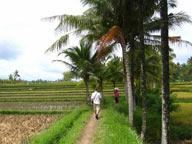 foto VIAJES Indonesia, Papúa 4