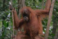 foto VIAJES Indonesia 4