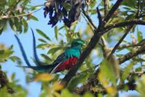 foto VIAJES Costa Rica 3