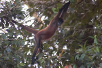 foto VIAJES Costa Rica 2