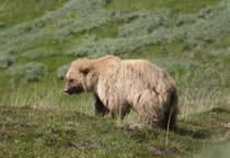 foto VIAJES Alaska 6