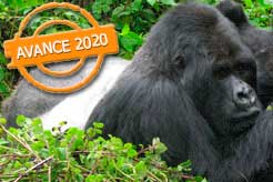 imagen Uganda, Rwanda