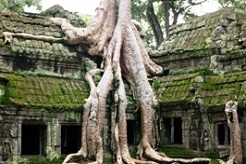 imagen Vietnam, Camboya