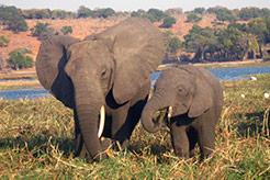 imagen Botswana, Zimbabwe, Cataratas Victoria