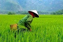 imagen Vietnam
